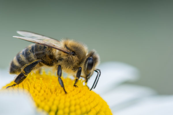 Become a bee rescuer!